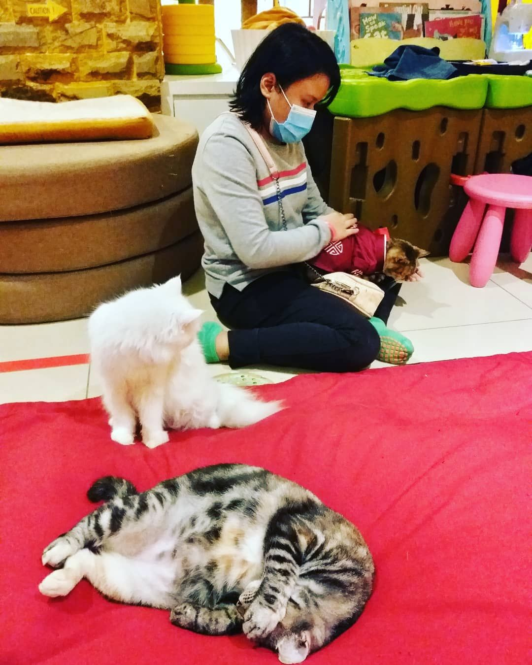 Benji Sandwich And Peanut With The Visitor Sunway Putra Mall Cat Kucing Visit Weekend Playground Kl Eip Early Hanging Out Cats The Visitors