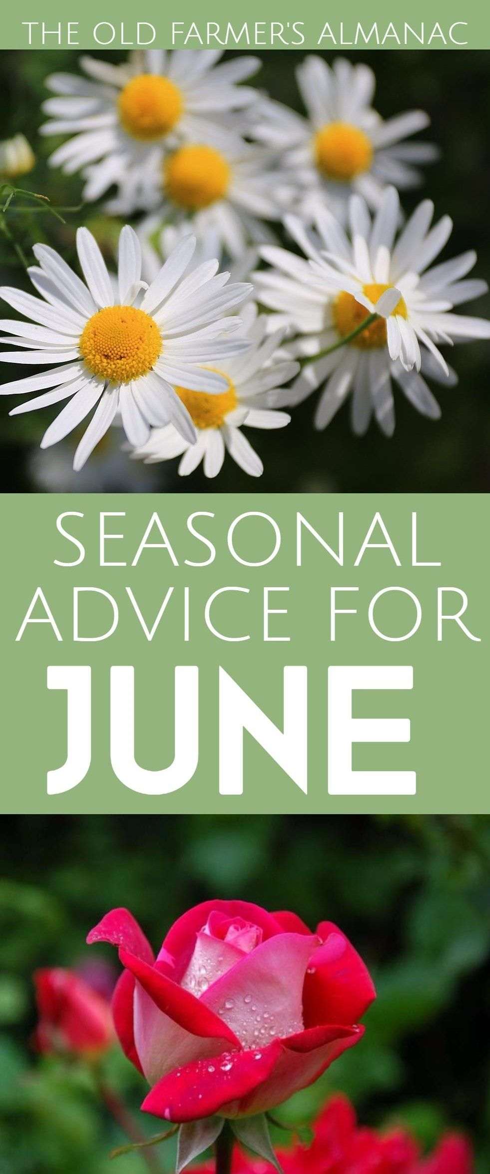 The Month Of June 2017: Holidays, Fun Facts, Folklore