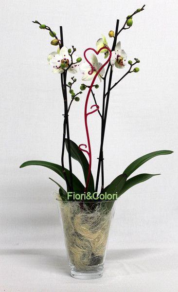 Orchidea In Vetro Fiori A Fermo Fiori Piante Acquista Online