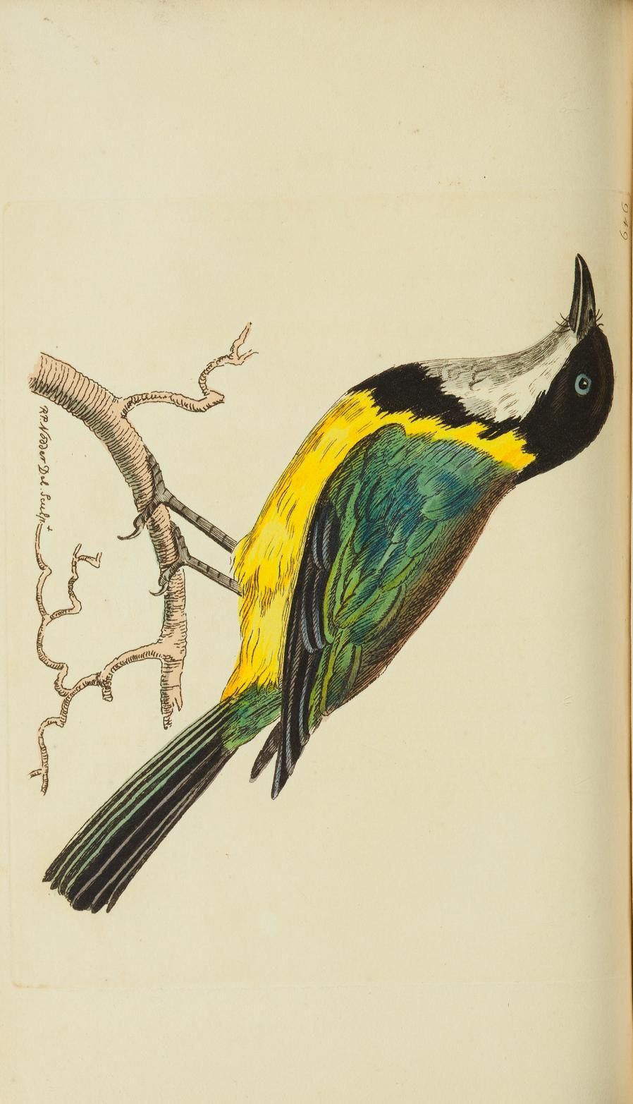 v.22 - The naturalist's miscellany, or Coloured figures of natural objects - Biodiversity Heritage Library