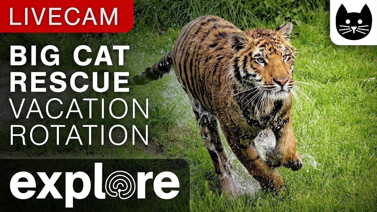 Vacation Rotation Big Cat Rescue powered by