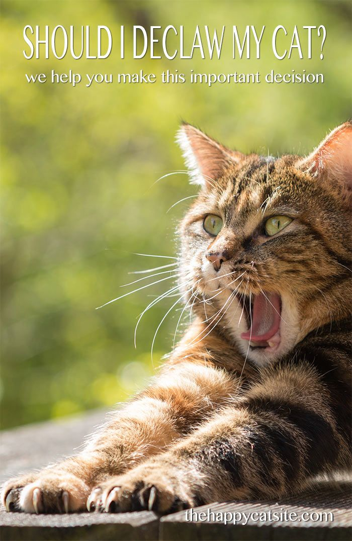 Should I Declaw My Cat We Help You Decide Declawing
