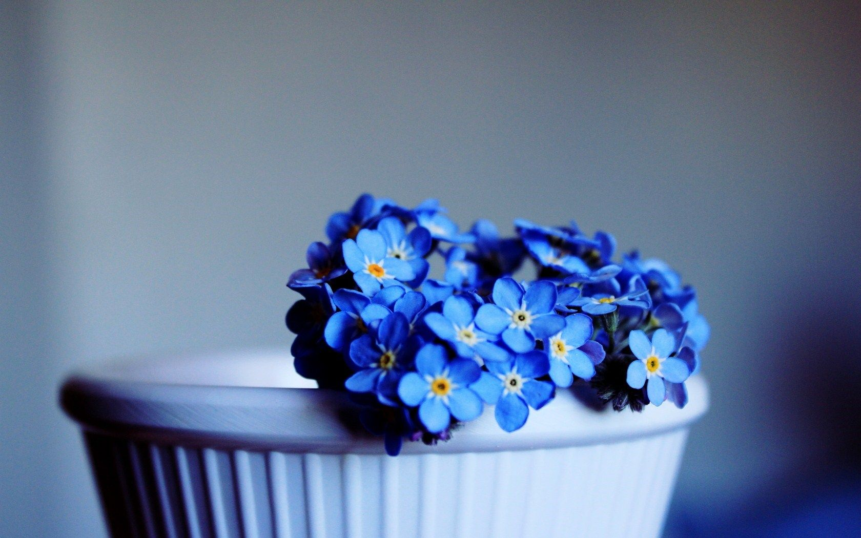 Forget Me Not Blue Flowers Hd Wallpaper Freehdwalls Wallpaper