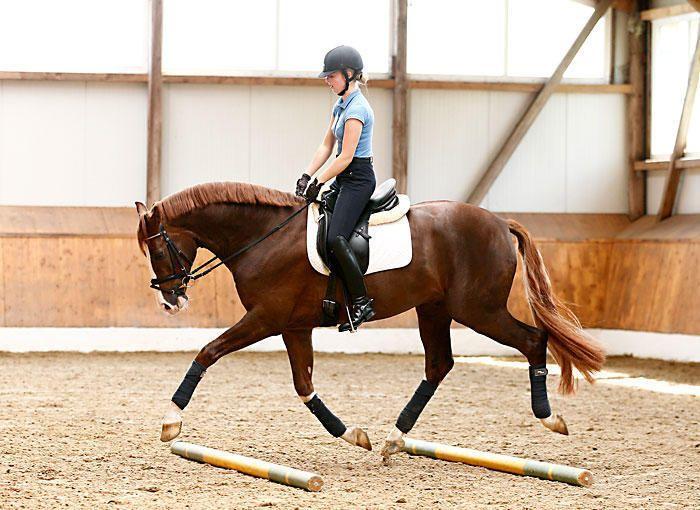 Dieses Pferd veranschaulicht die Bedeutung der Federung in einer einfachen Gymnastikstangenübung. Muss ich lieben diese ausgefallenen Warmblüter!