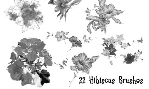 Free And Fantastic Hibiscus Flower Photoshop Brushes Hibiscus Flowers Hibiscus Flowers