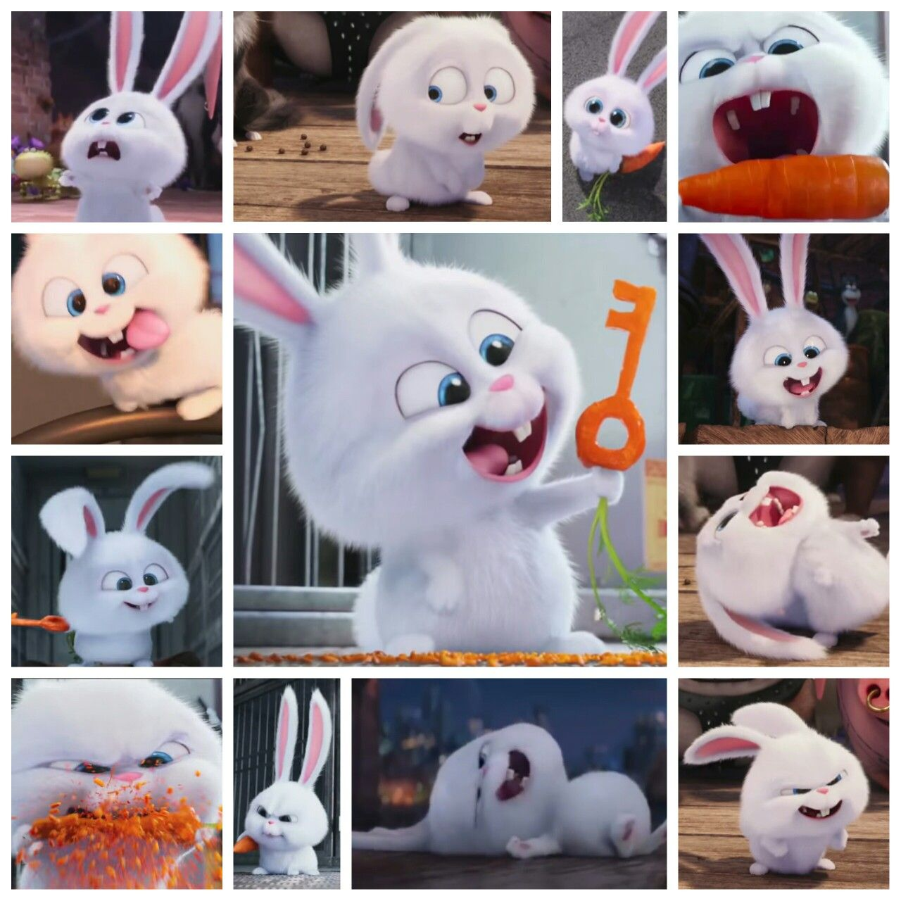 Secret Life Of Pets Snowball Collage La Vida Secreta De Tus Mascotas Pinturas De Gato Dibujo De Conejitos