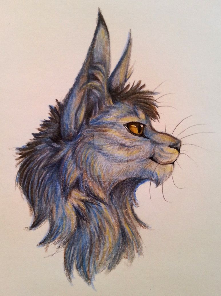 Warriors Greystripe by on