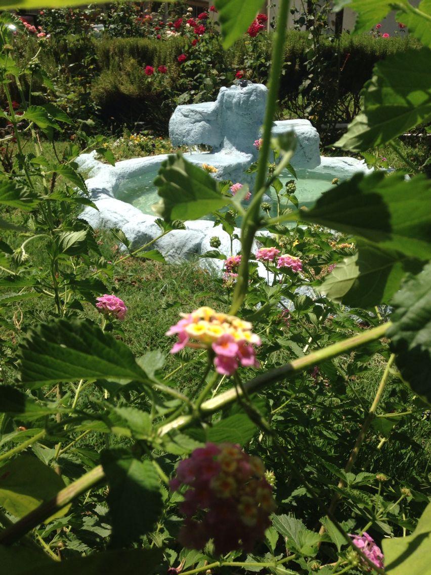 Dedeciğimin bahçesiydi... Mine çiçekleriyle doluydu hertaraf :(