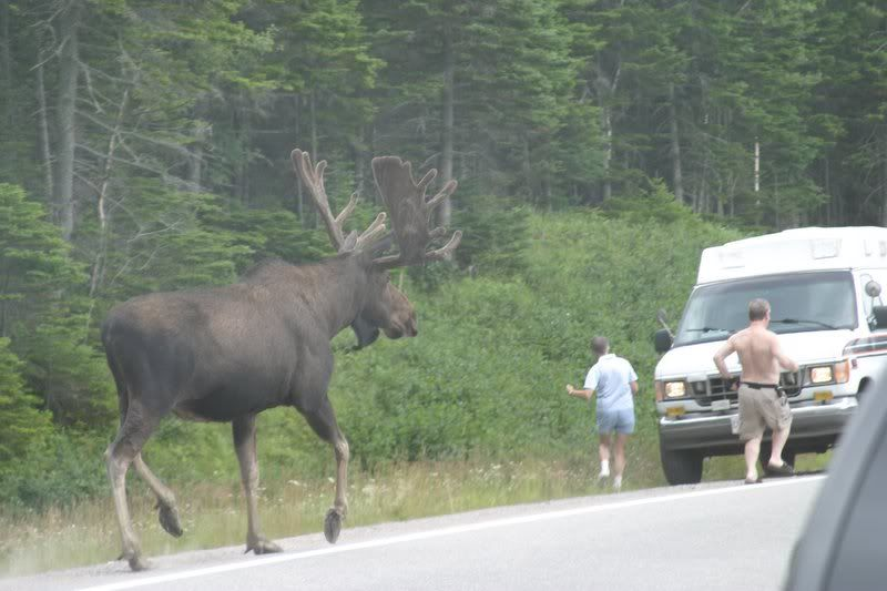 largest moose picture | Algonquin Adventures Message Board ... World Largest Animal Ever Recorded