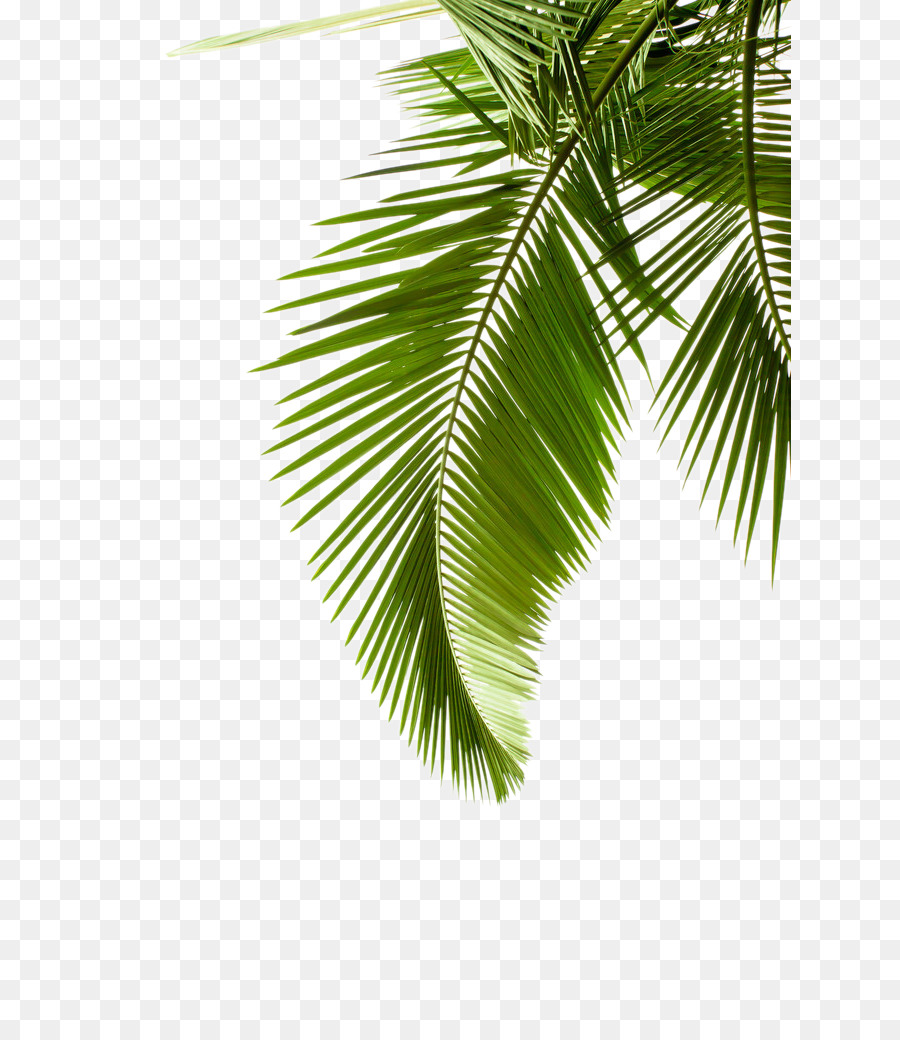 Palm Tree Background Png Download 683 1024 Free Transparent Paper Png Download Cleanpng Kisspng Palm Tree Background Palm Branch Palm Tree Png