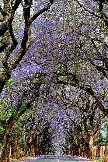 Sud-Àfrica, Pretòria.