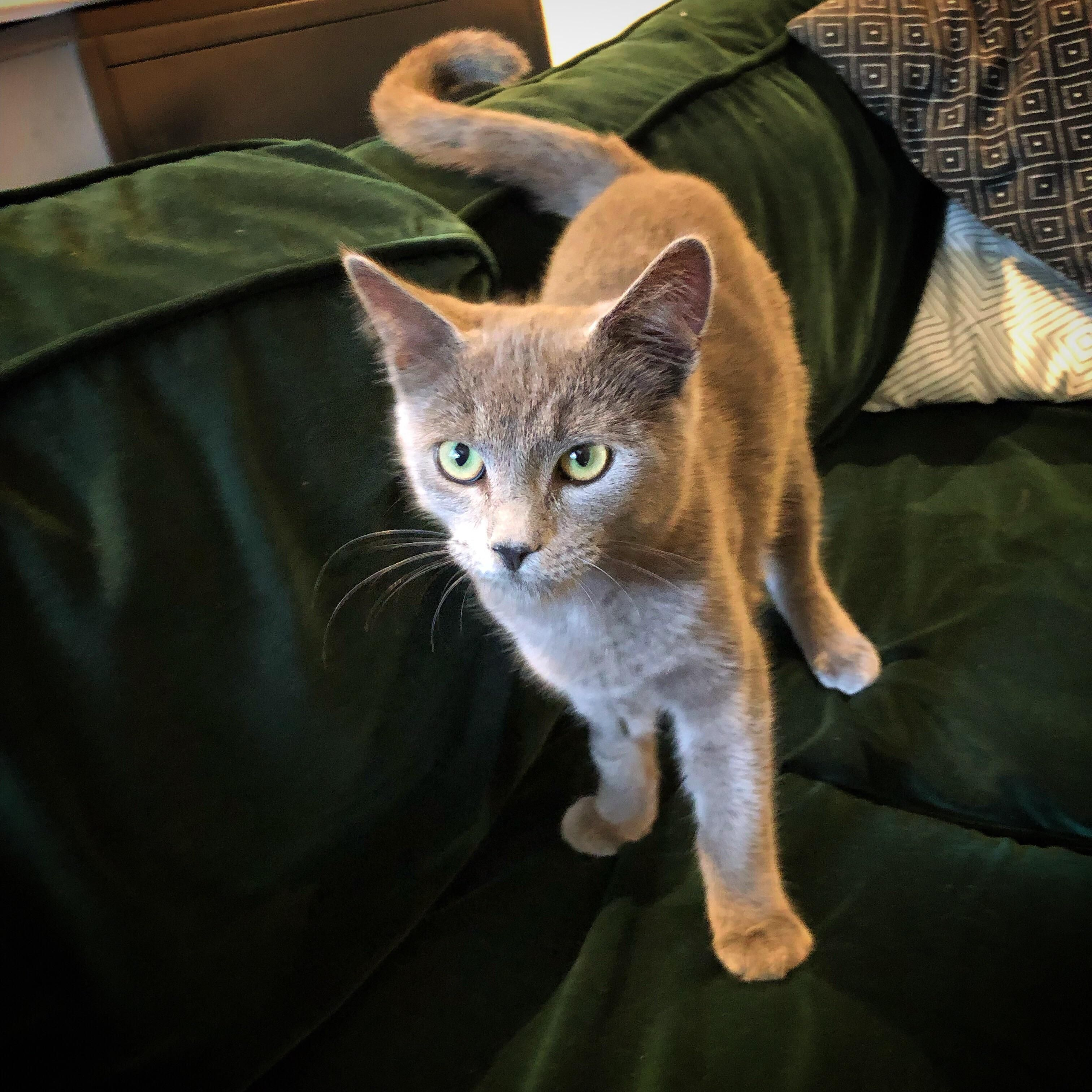 I Just Adopted My First Cat Reddit Say Hello To Vladimir Funny Looking Cats Cute Funny Animals Funny Animal Pictures