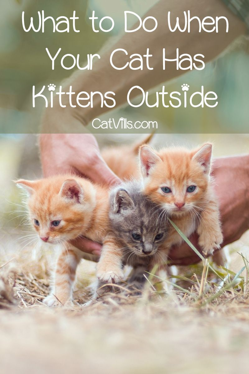 Cat Had Kittens Outside Where They Hide Them And Why Cat Having Kittens Kittens Cats