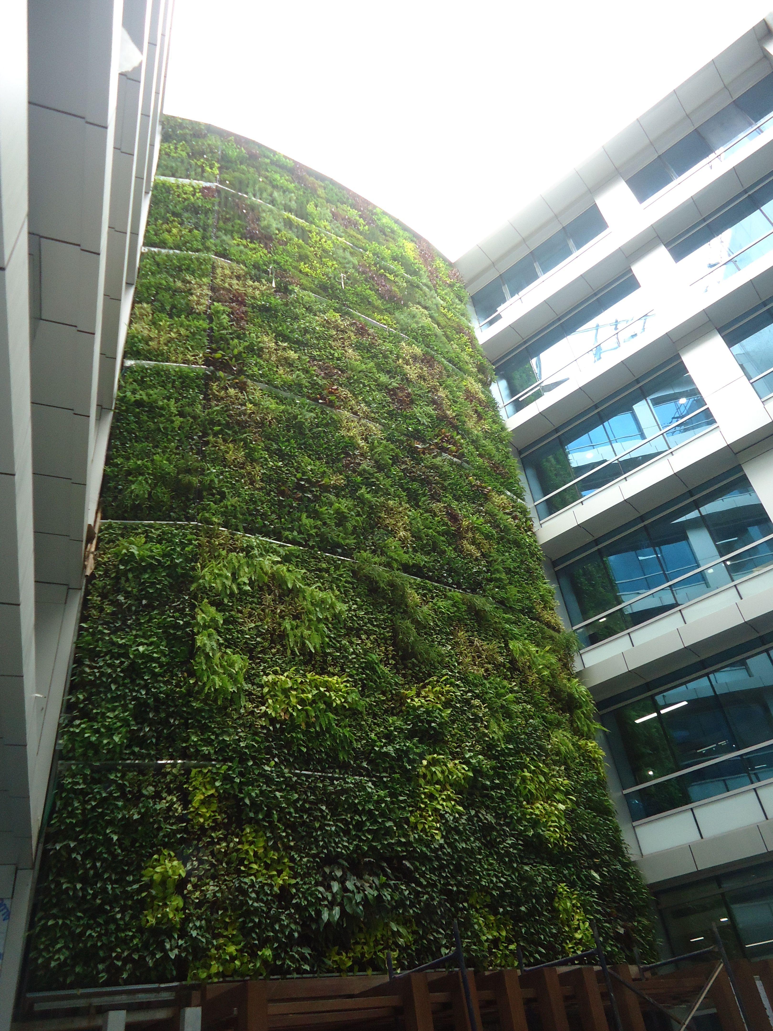 ELT Green Wall at HDFC Mumbai, India. | Vertical Gardens ...