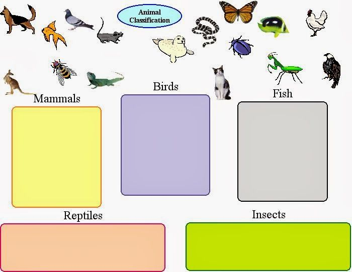 Vertebrates And Invertebrates Worksheets Vertebrates and – Classification Worksheets
