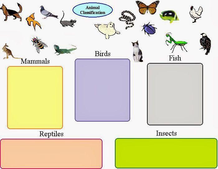 Vertebrates And Invertebrates Worksheets Vertebrates And
