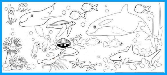Gambar Mewarnai Hewan Laut Gambar Diwarnai Coloring Pages To