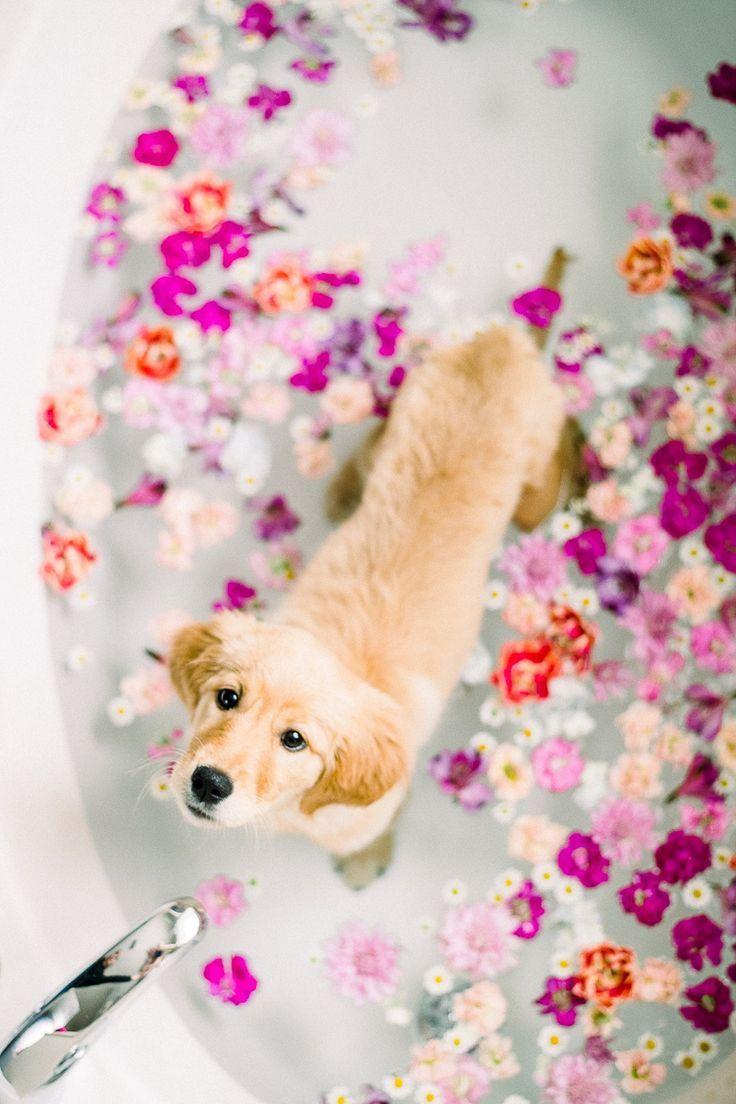 Puppy Love Floral Bath for a Golden Retriever Pup in 2020