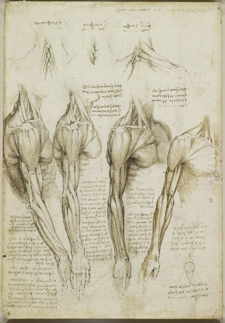Davinci Legs Muscles Buscar Con Google Leonardo Pinterest