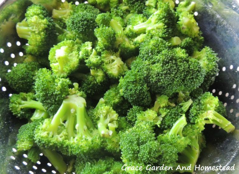 How to freeze fresh broccoli with images fresh