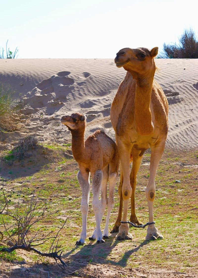 30 Adorable Animals Posing with Their Parents Baby