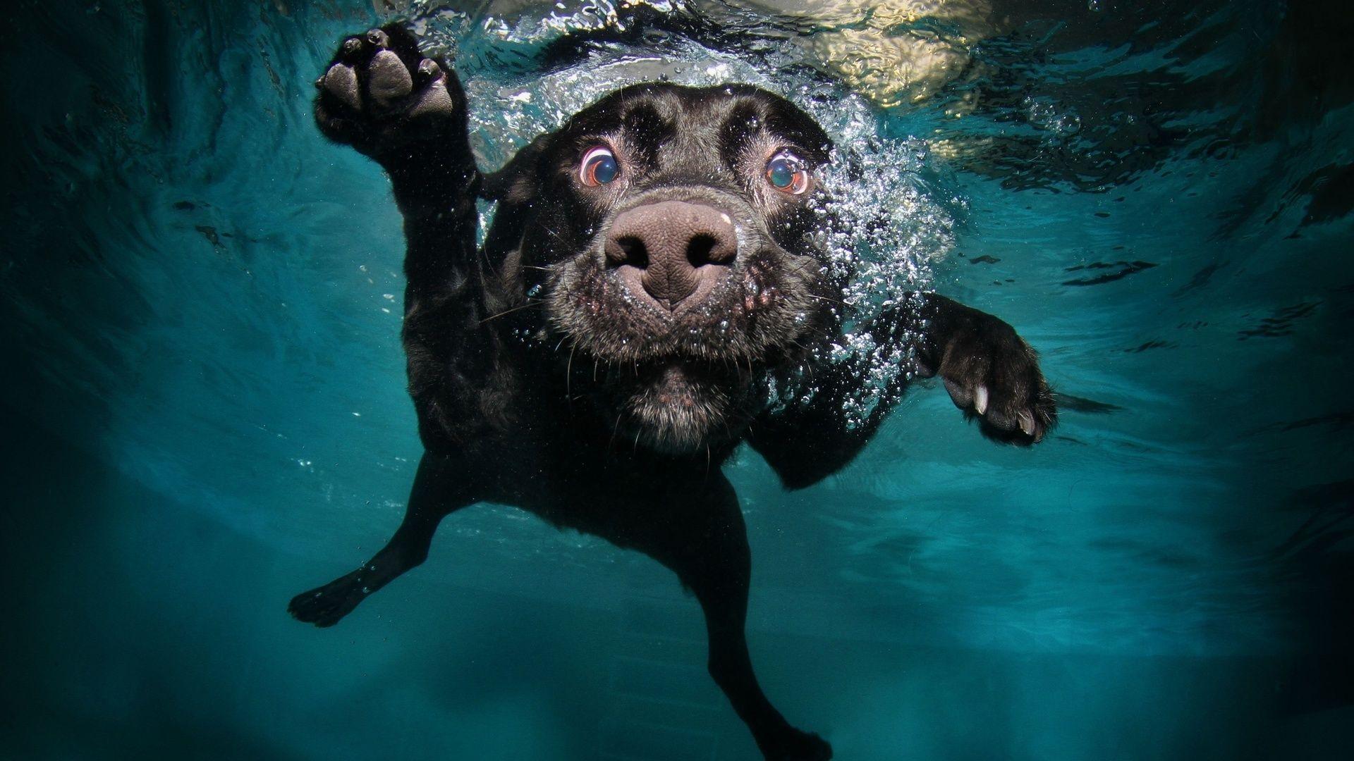 Hd wallpaper underwater - Underwater Dogs Wallpaper Hd Wallpaper