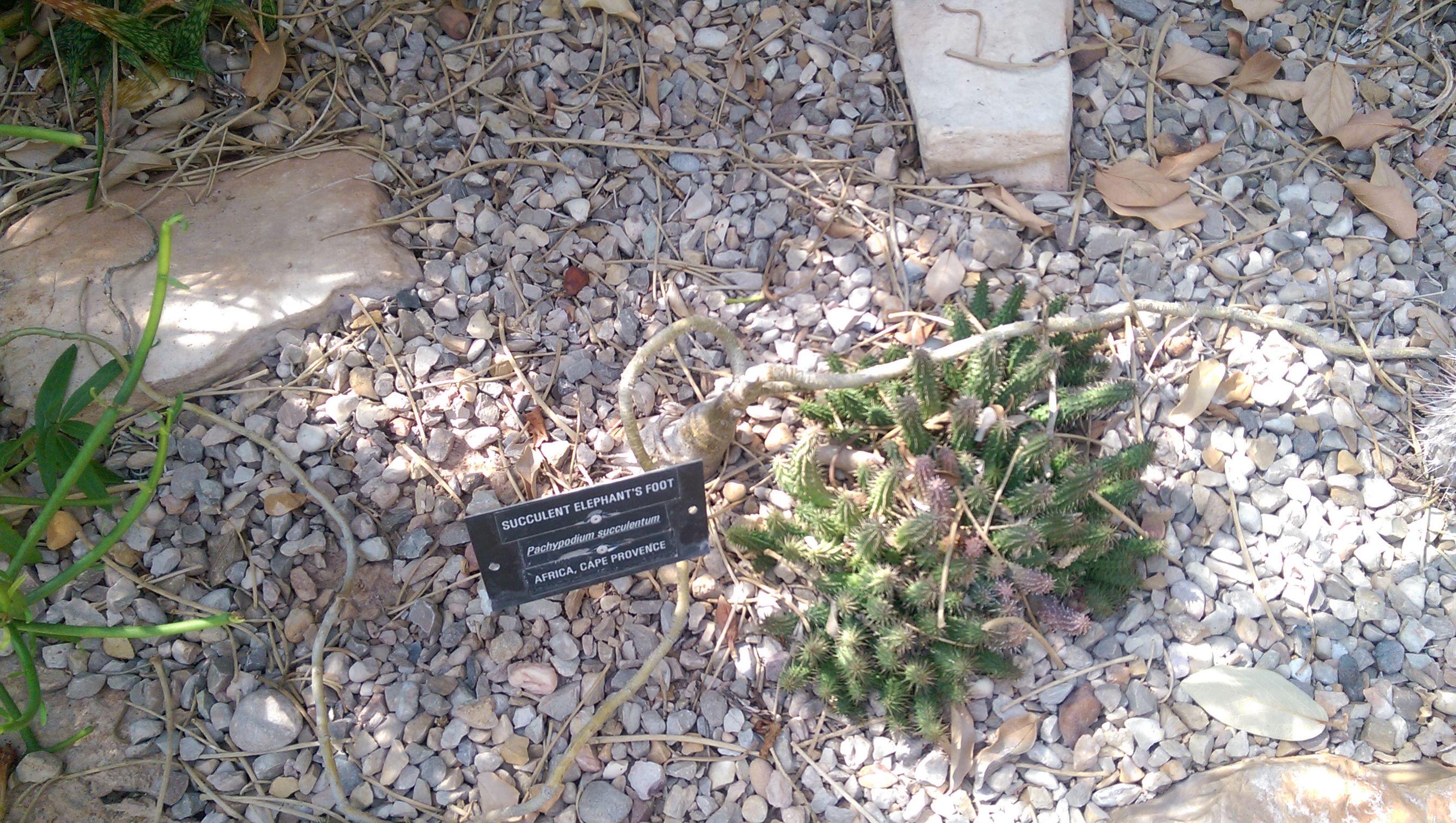 Living Desert Zoo And Gardens Carlsbad Nm