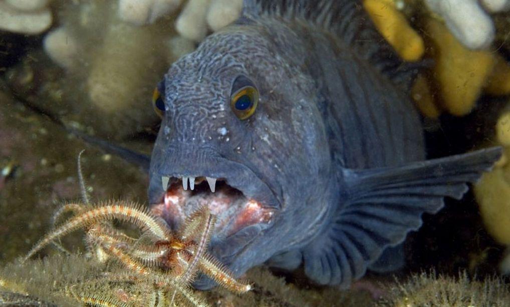 Pin Pa Fisk Fish