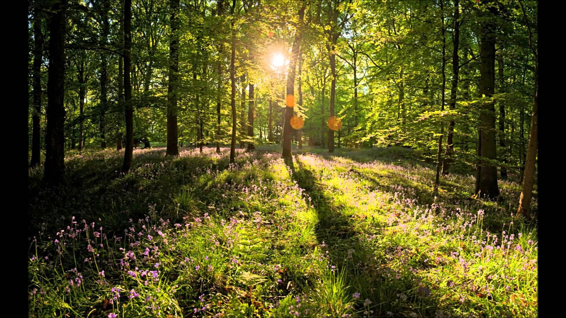 Zitten In Aandacht Voor Je Ademhaling Meditatie Spiritualiteit Relax