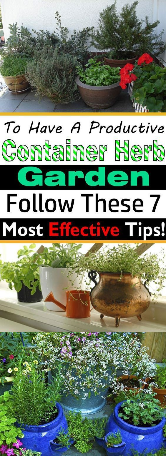 To Have A Productive Container Herb Garden, Follow These 7 Most Effective Tips! is part of Herb garden Containers - If you're growing herbs in pots, must follow these herb gardening tips!