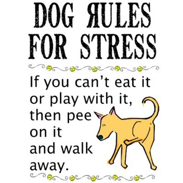 Funny Stress Quotes Funny Quotes On Funny T Shirts Stress