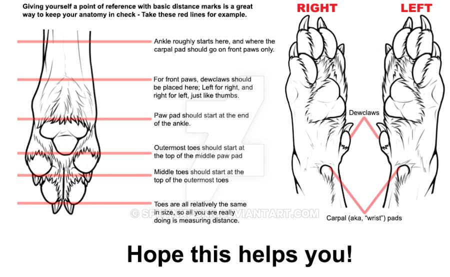 Perfect Dog Foot Anatomy Motif Human Anatomy Images