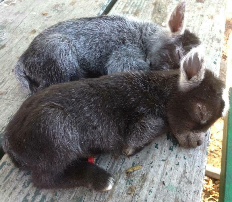 Sleeping Baby Donkeys Cute Animals Cute Funny Animals Cute