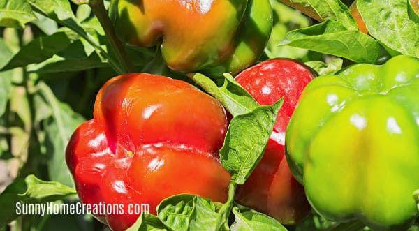 10 Awesome Vegetable Plants For Beginning Gardeners Wanda