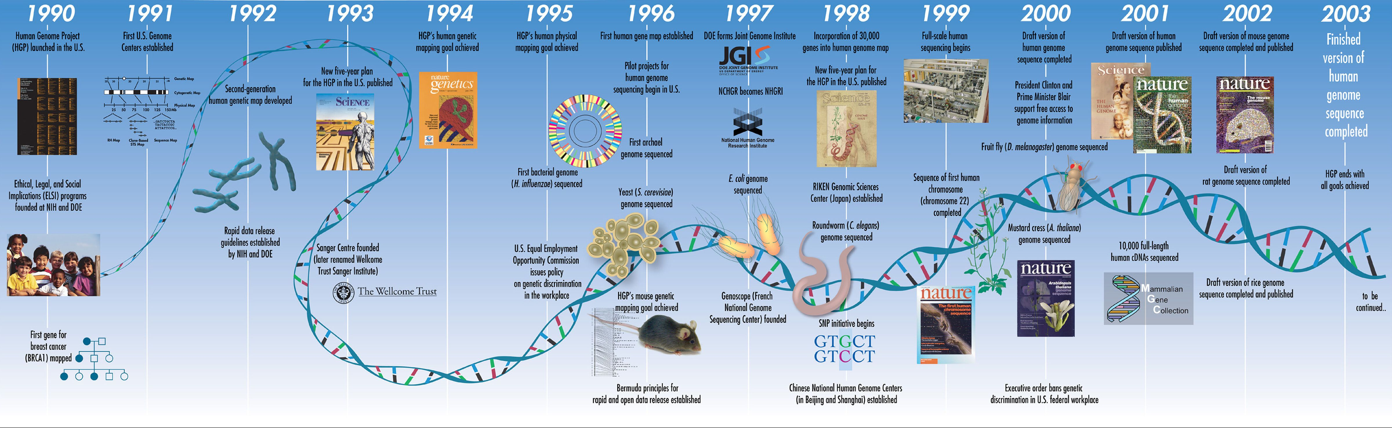a view on the humane genome project 3 days ago  the human genome project was an international research effort to determine the  sequence of the human genome and identify the genes that it.
