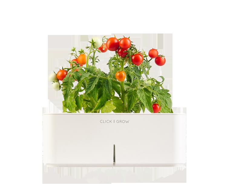 Click and grow - Smartpot con Mini Tomate
