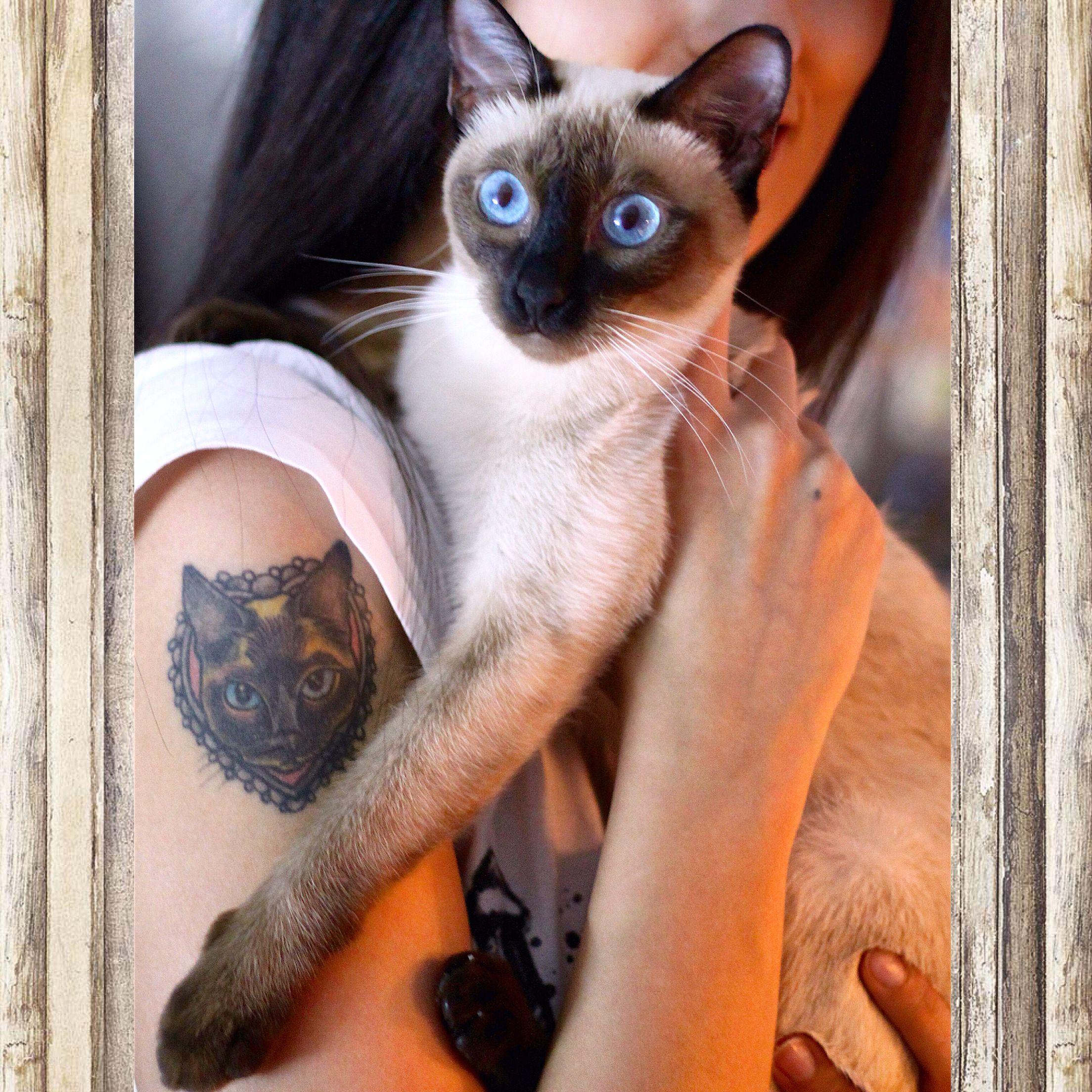 my siamese cat alice my cat tattoo tattoo pinterest siamese rh pinterest co uk siamese cat tattoo small siamese cat tattoo small