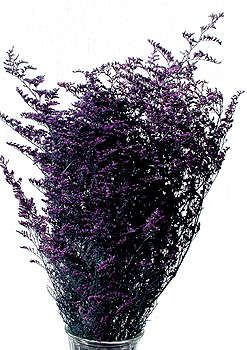 Caspia I N Flower In March Nz Great Purple Love Purple Rocks And Crystals