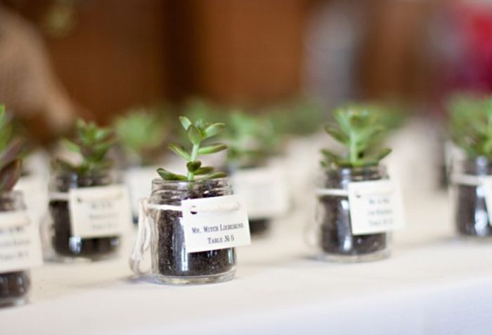 Diy Plant Wedding Favors I Love This Idea But Tony Said His Family Would