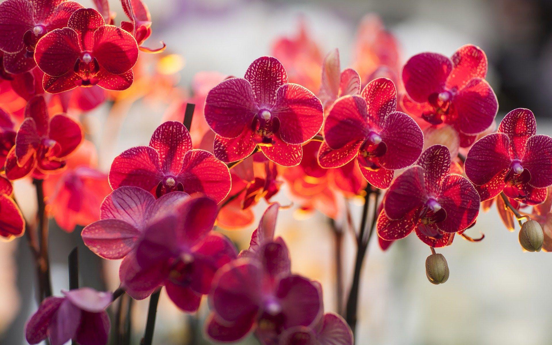 orchids wallpaper flowers u butterflies pinterest