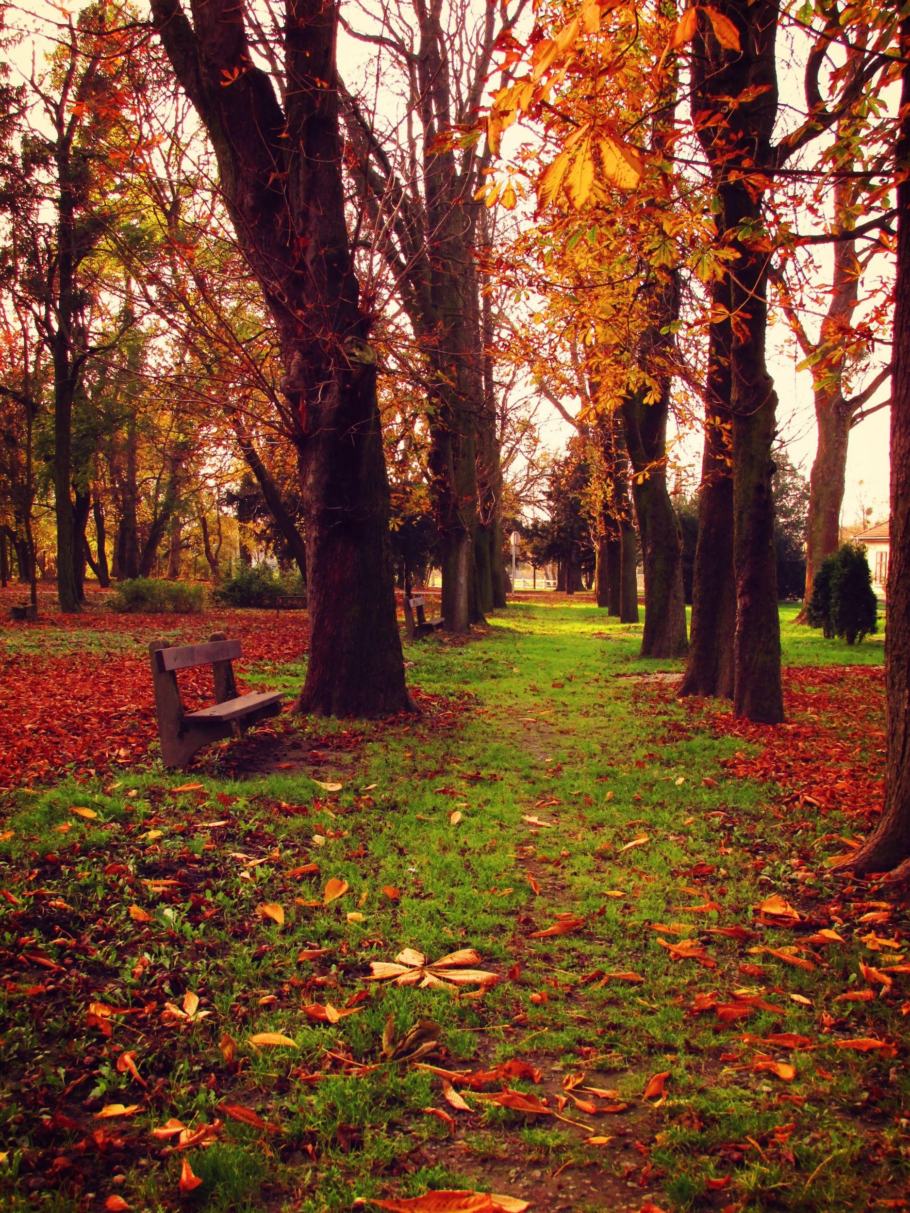 Autumn, November