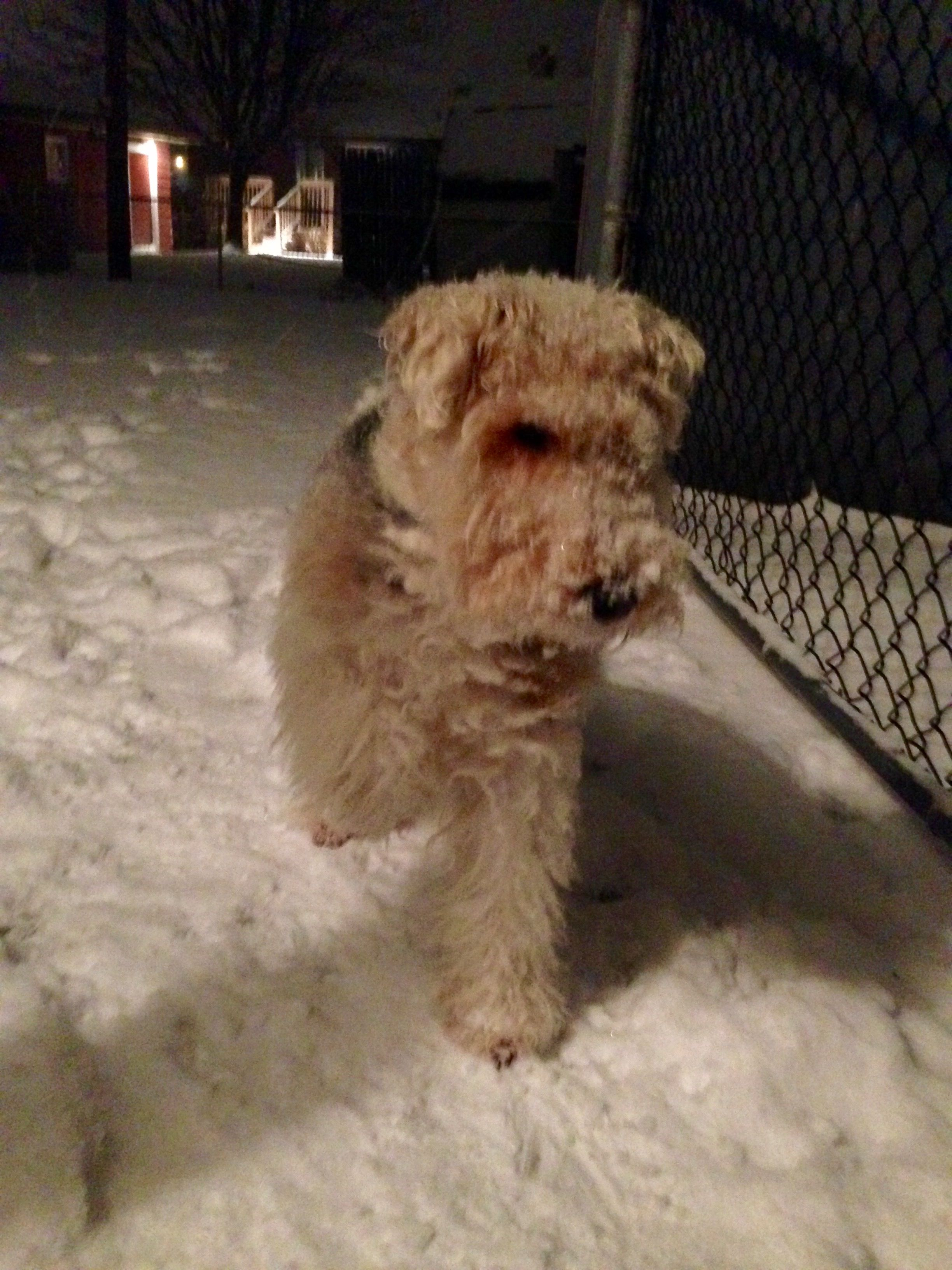 Time to go inside my paw is cold!