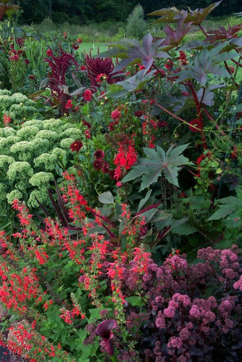 Late summer glory...sedum, castor bean and more.