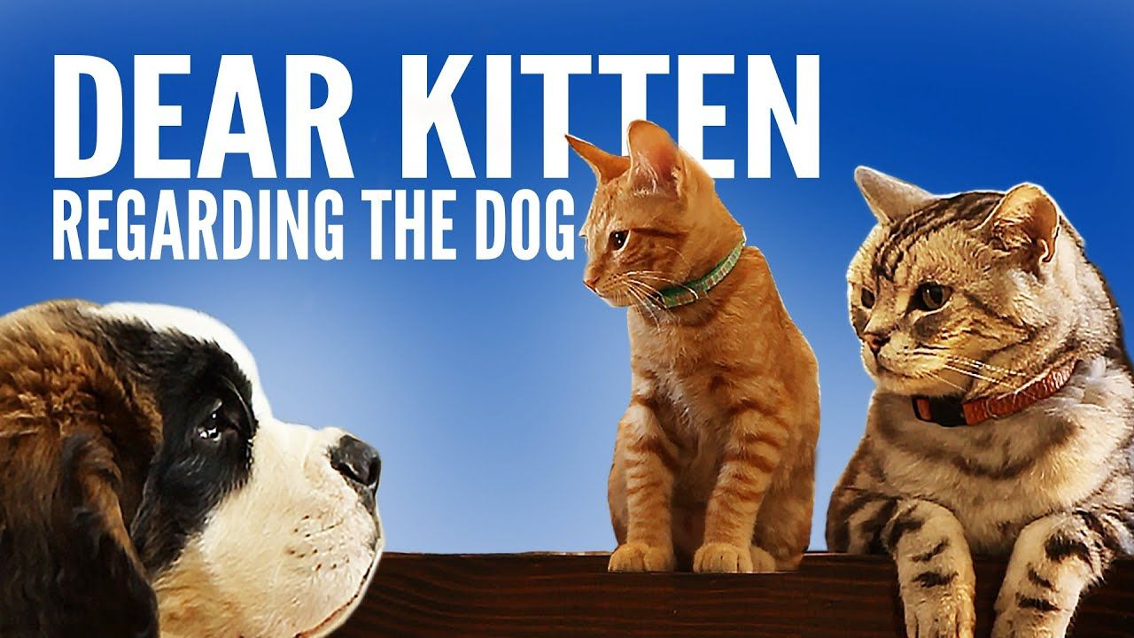 Dear Kitten Regarding The Dog Youtube Funny Cats And Dogs Cats And Kittens Kitten