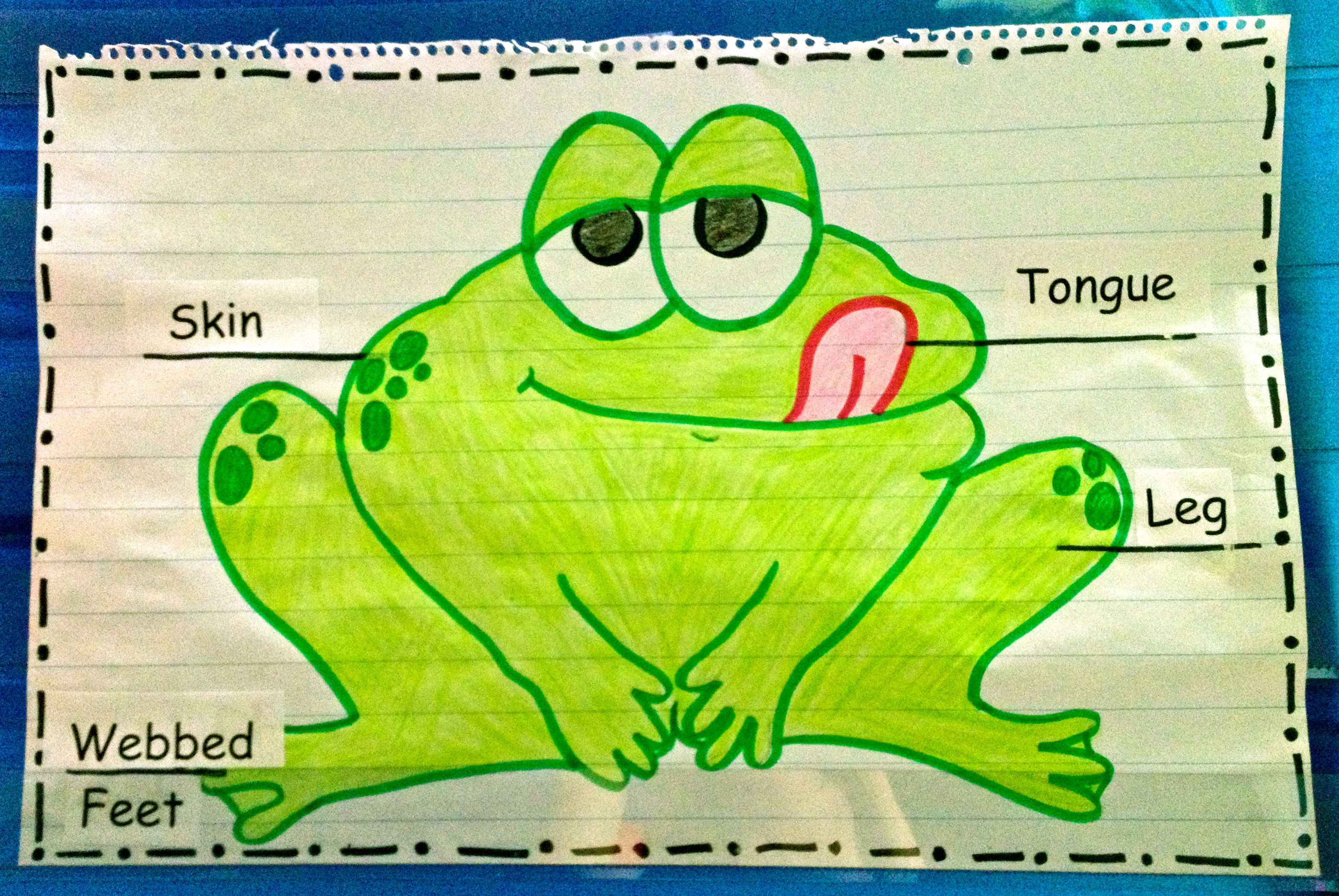 I Use This Anchor Chart To Label And Describe The Characteristics Of A Frog