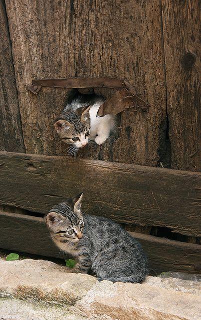 kittens: