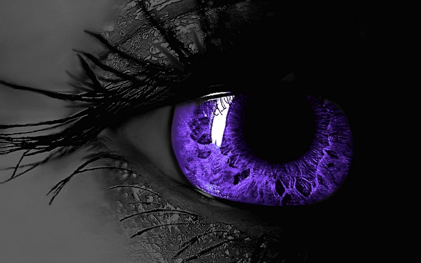 black and purple background wallpapers 2393 hd