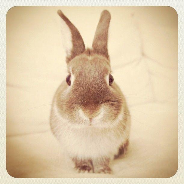 Bunnyyyyy :)