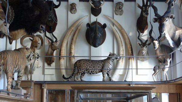 Musée de la chasse et de la nature Paris Justin\u0027s Alone Time