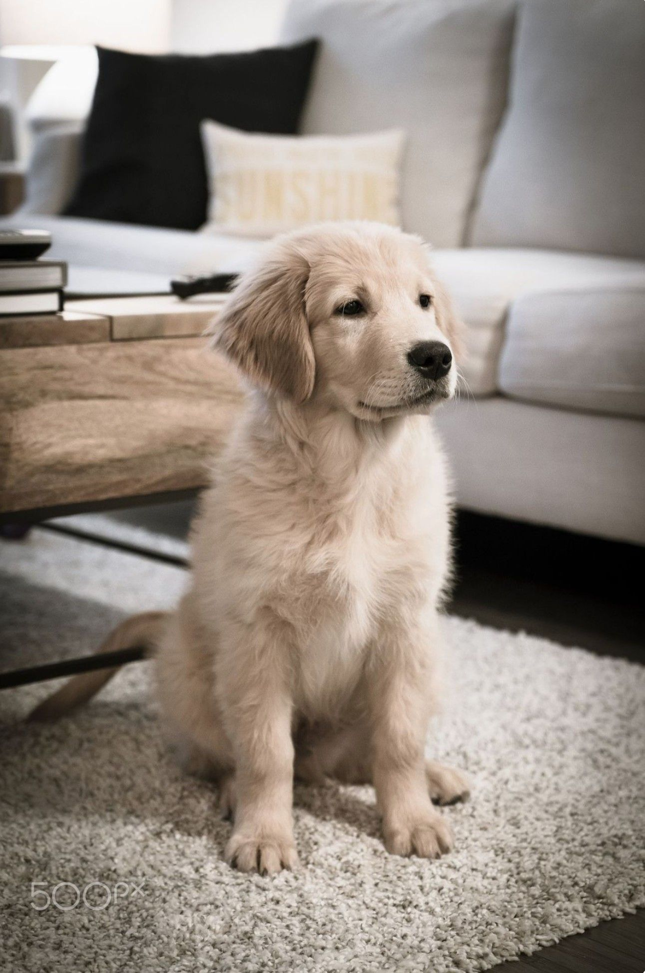 Pin By Hayley Clark On Dog Retriever Puppy Dogs Golden